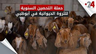 حملة التحصين السنوية للثروة الحيوانية في أبوظبي