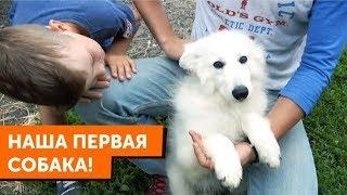 Наша первая собака -Белая Швейцарская Овчарка (БШО). Чем я занимаюсь в Москве.