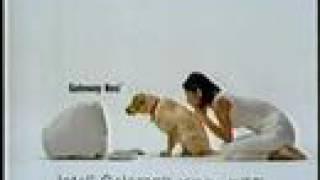 伊東美咲が犬と一緒に「クゥーン」と鼻を鳴らす、ゲートウェイのパソコ...