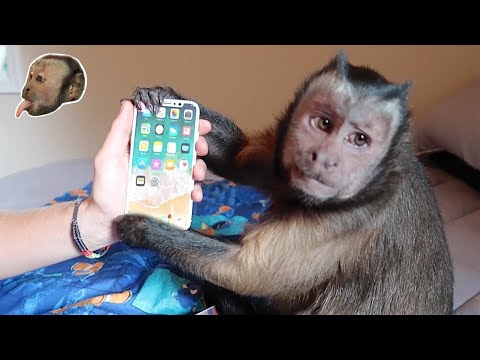 Monkey unboxing iPhone X