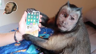 Monkey unboxing iPhone X