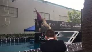 From the Beverly Hill KC Dog Show- Dock Diving