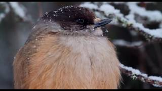 """Video: Matila-Röhr Productions Soundtrack: """"Bring the Snow"""" sung by..."""