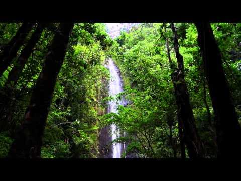 Manoa Falls, Oahu, Hawaii.