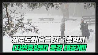 제주도의 숨은 겨울 휴양지 [자연휴양림] 풍경 대공개!…
