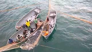 Ловля кефали на Черном море(Древнейший способ ловли кефали на Черном море. На видео показана финальная стадия процесса. Закрыли около..., 2016-10-17T06:35:55.000Z)