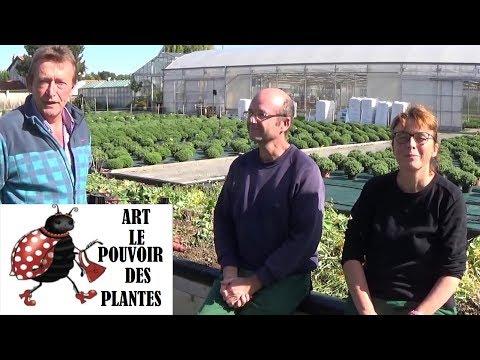 Jardinage: permaculture: récolte! INCROYABLE !! 184 Kilos de fruits et légumes! Dans 15m2!