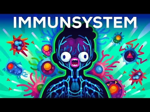 Das Immunsystem erklärt