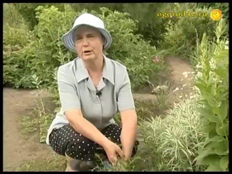 Купить лекарственные травы и монотравы от производителя. Травы, там же вы сможете купить интересующую вас траву. Иссоп трава 16р/10г.