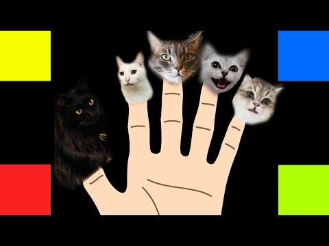 Finger Family Song  Cats Version