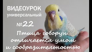 """🎶 Учим попугая говорить. Урок №22: """"Птица говорун отличается умом и сообразительностью"""""""