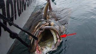 Amazing Halibut Fishing Skills on The Deep Sea, Street Food,  Processing Moon Fish Fast Skills