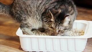 "Лоток с наполнителем, ""Сибирская кошка"""
