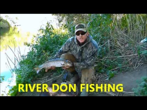 RIVER DON  BARBEL AND CHUB FISHING - VIDEO 45