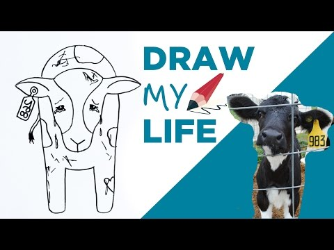 Draw My Life 🐮 A Cow in Today's Dairy Industry