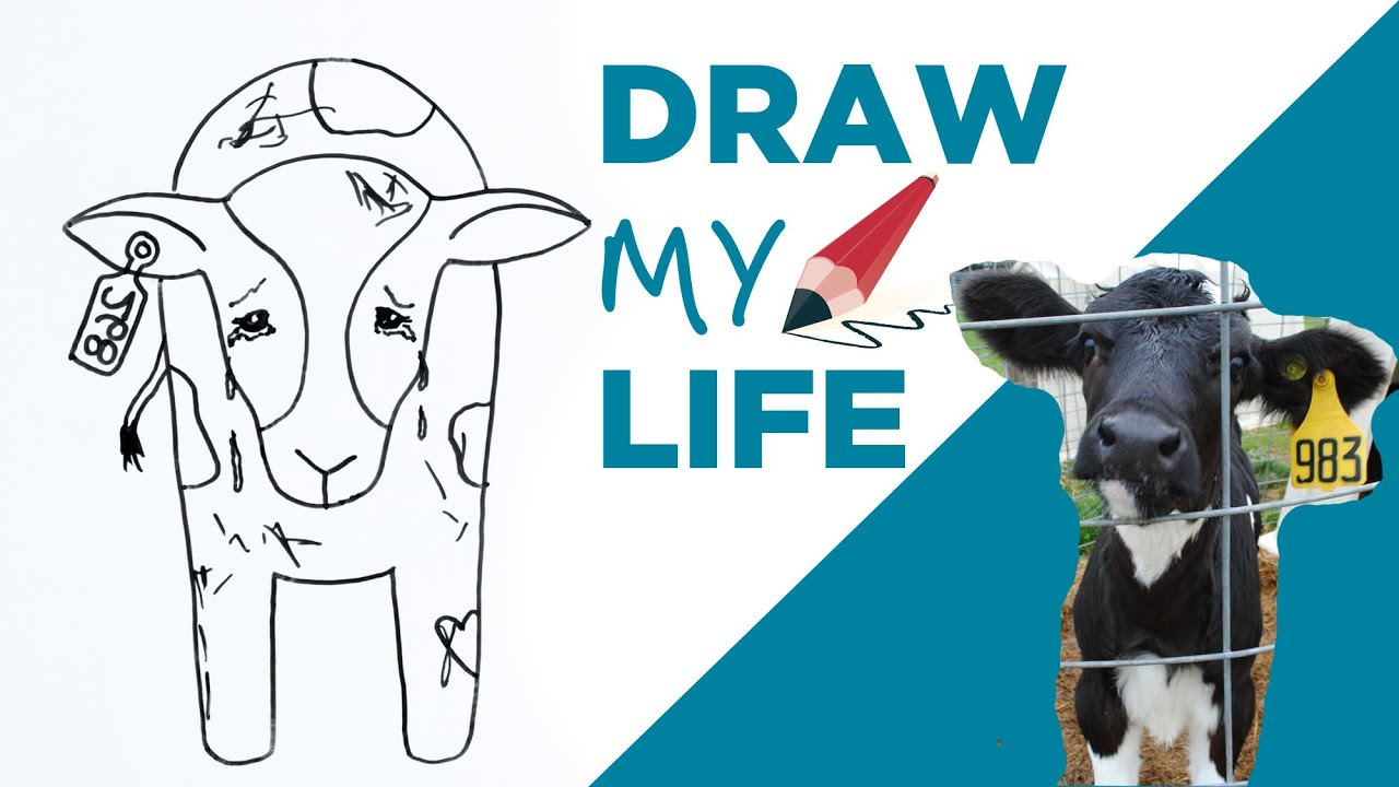 Draw my life a cow in todays dairy industry youtube draw my life a cow in todays dairy industry pooptronica Image collections