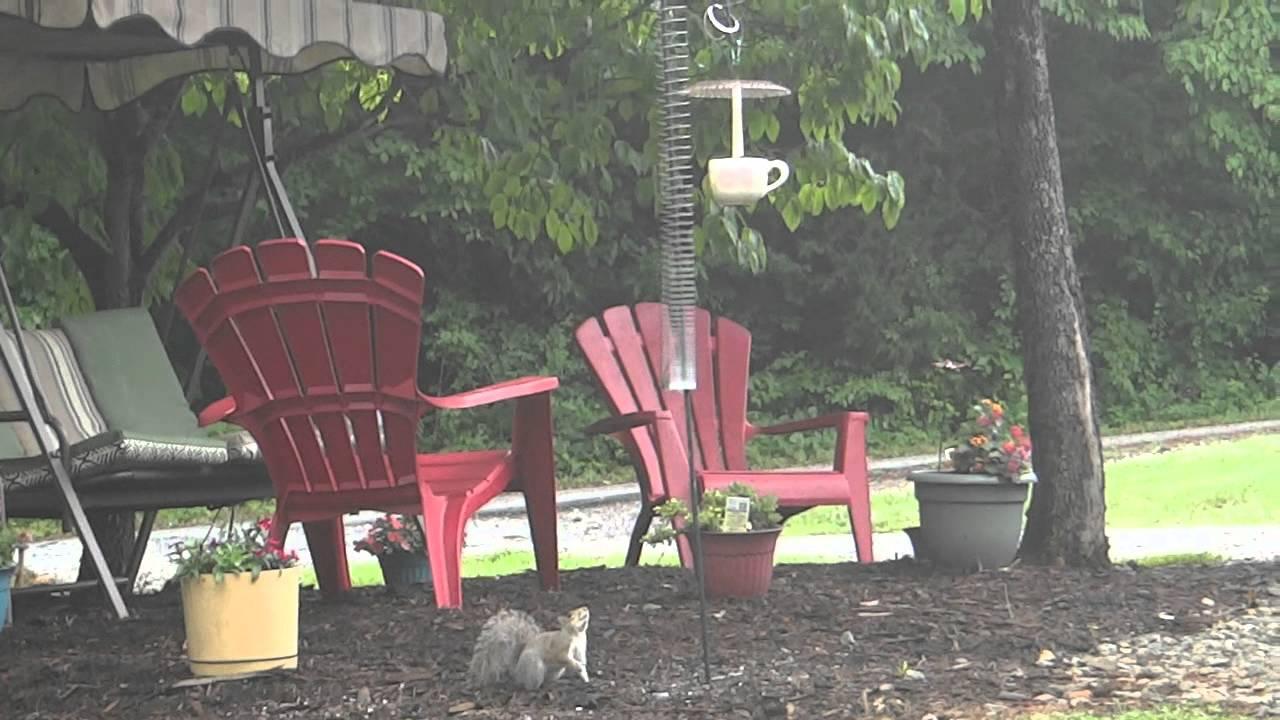 squirrel proof bird feeder slinky easy craft ideas. Black Bedroom Furniture Sets. Home Design Ideas