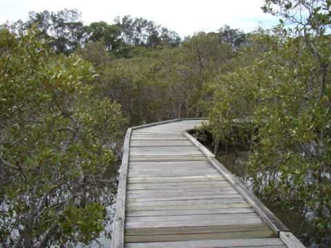 Boardwalk Mangrove Walk - Coffs Harbour