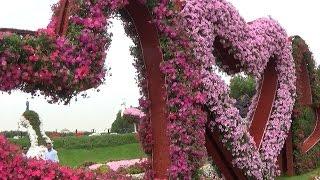 Дубай. День 1. Miracle Garden и Отель-парус . Наш отель. В Дубай грязно? 😎☀ 🐳(Отдых в Дубай в марте. Что посмотреть и как спланировать путешествие. Спасибо за просмотр))), 2016-07-08T21:04:32.000Z)