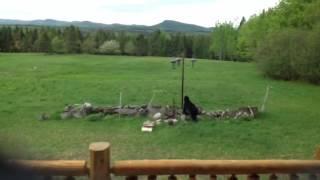 Bear-proof Bird Feeder Test