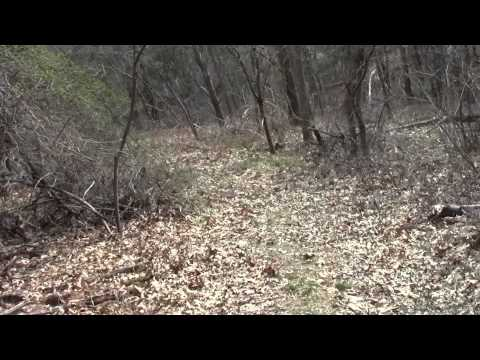 Neponset River Greenway Canton MA Fowl Meadow Part 10.