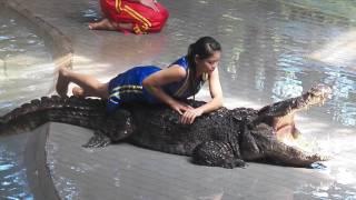 Шоу Крокодилов. Таиланд. Паттайя. Тигровый зоопарк Сирача (Siracha Tiger Zoo)