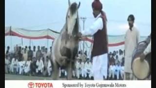 Nisar Stud Farm, Shahbaz Nisar Khan, (PML-N), Ghora Dance, (Horse Badal) Gujranwala, Pakistan,