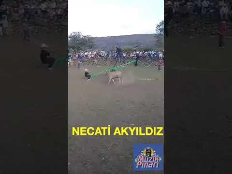 Rodeo Man vs Bull - Toro Totter