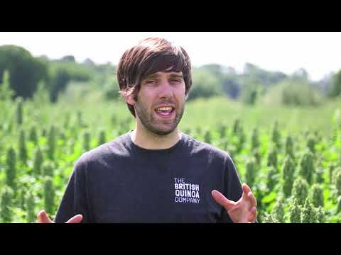 Organic British Quinoa July 2017