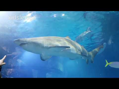 Swim with sharks - Sea Life Melbourne Aquarium