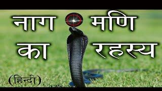 Cobra male female |naag or nagin | गांव से पकड़ा नाग नागिन का जोड़ा |