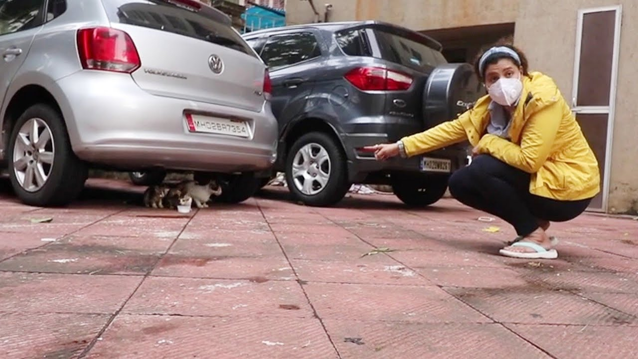 Learn MOTHERHOOD from this amazing CAT | Ss Vlogs :-)