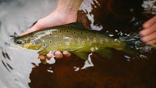 Рыбалка в Карелии. Ловля форели. В поисках крупной форели. | Fishing in Karelia. Trout fishing.
