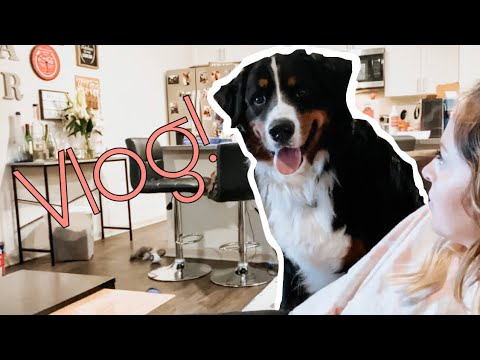 Life With A Bernese Mountain Dog | Vlog 2