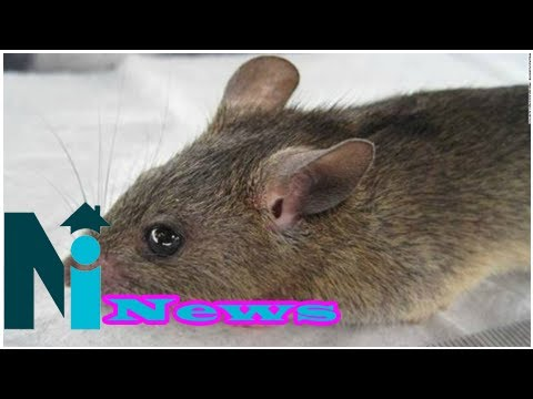 Nigeria reaches record high with 72 dead from Lassa fever