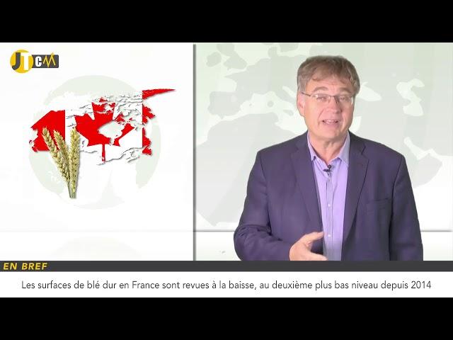 Baisse attendue des surfaces de blé dur en France !