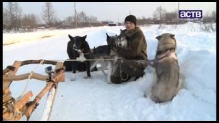 Уникальную породу ездовых собак возрождают на севере Сахалина