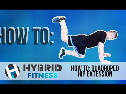 How To: Quadruped Hip Extension | Glute Builder