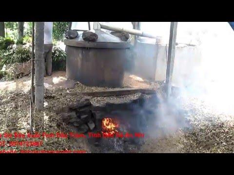 Quá trình chiết xuất tinh dầu tràm An Nhi