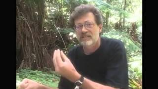 Terence Mckenna   Timewave zero explained in under ten minutes