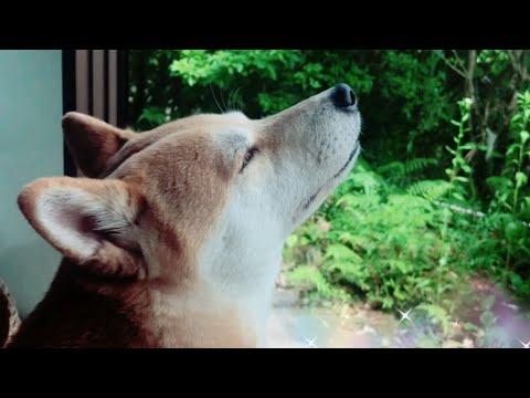 犬は車の音がしなくても飼い主の帰宅に気付く?Dog and cat waiting for owner to get home