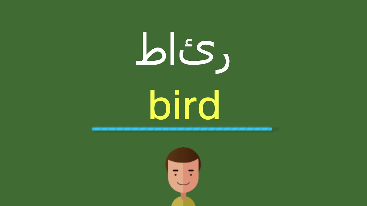 كيف أقول طائر بالل غة الإنجليزي ة Youtube