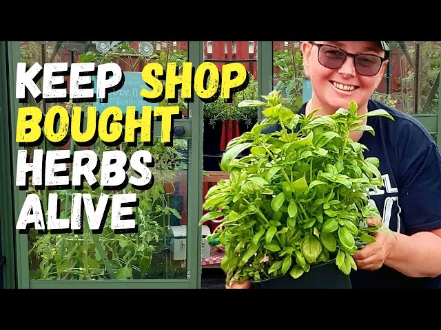 How to keep shop bought herbs alive