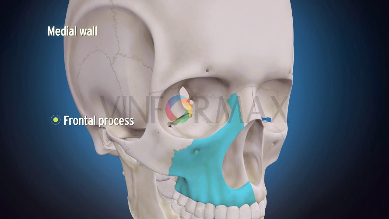 S3DMediMagic for Human Anatomy- Orbit - YouTube
