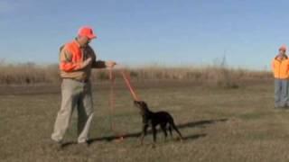 Gordon Setter Yard Training