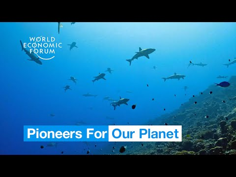 This Island Nation Banned Fishing In An Area Of Ocean The Size Of France | Pioneers For Our Planet