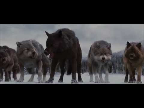 MV ~ Twilight Wolf Pack - The Red