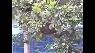(Crazy Masters) Desafiando abelhas parte 2!!!!!!