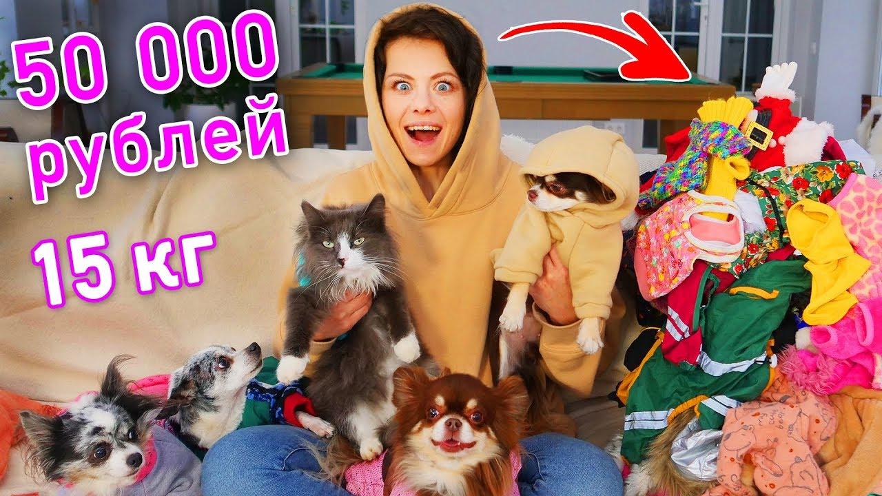 Вся одежда моих собак и кошки! Показ мод и обзор гардероба моих питомцев