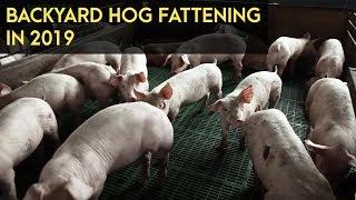 Backyard Hog Fattening: 2019 Market Scenario | Agribusiness B-MEG Episode 1